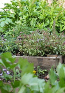 Raised bed in the garden.