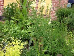 Lush green herbs growing