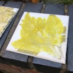 pressed yellow leaf