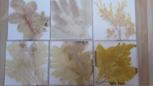 silhouettes of flowers and leaves in soft colours - golds, browns and blues