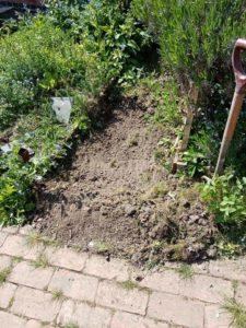 freshly dug soil in a vegetable bed