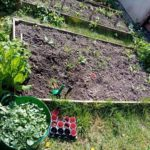 a raised bed of soil