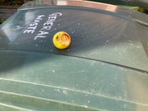 A solitary apple, with a chewed section, on a bin lid.