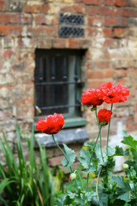 Red flowers against a wall.