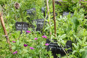 Close up of herb bed.
