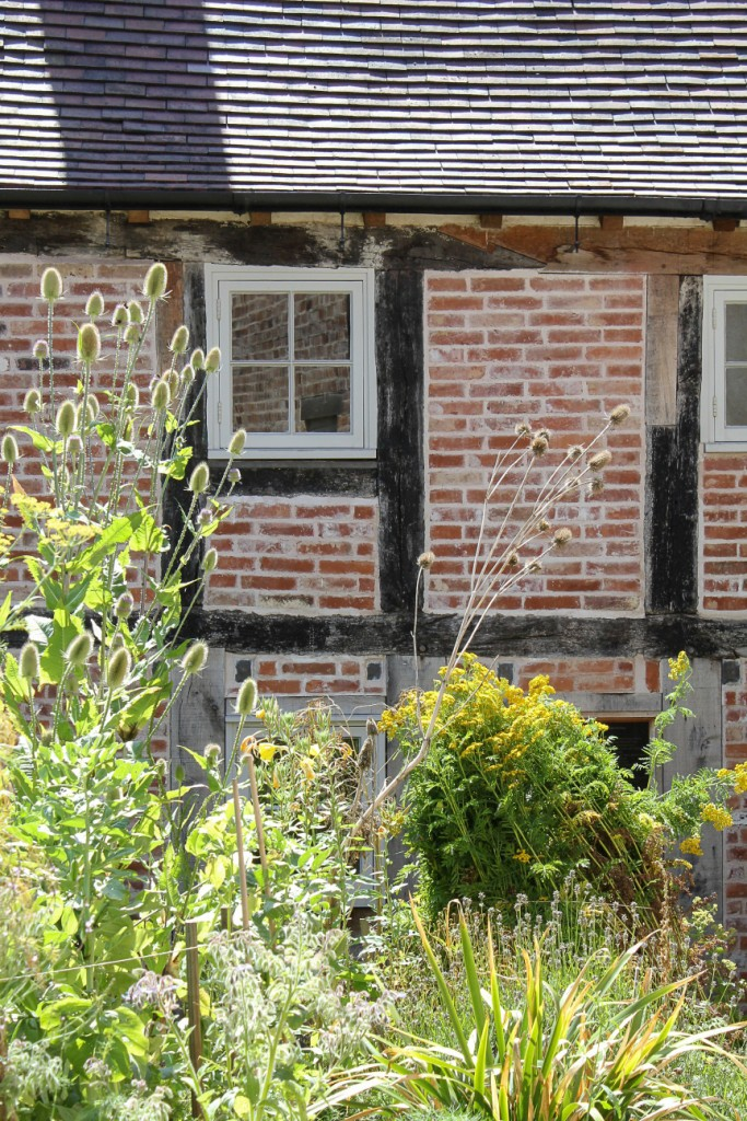 Teasels in the Weaver's House garden.