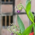 A purple flower.