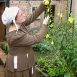 A woman in Tudor dress tends a yellow flower.