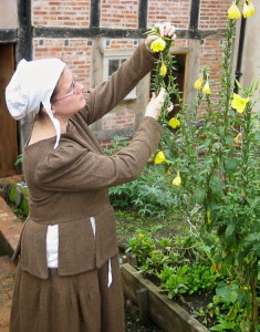 A woman in Tudor dress tends a yellow flower.
