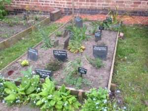 A raised bed with labelled herbs Meadowsweet, Tansy, Feverfew, Safflower, Lady's Bedstraw - all used for dyeing