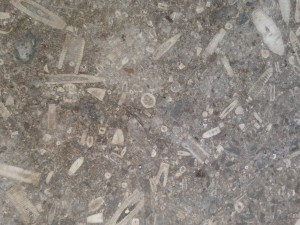fossil detail in stone in CET lobby