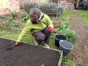 A woman preparing the soil of a raised bed