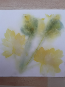 Aquilegia print, soft colours in the shape of flower