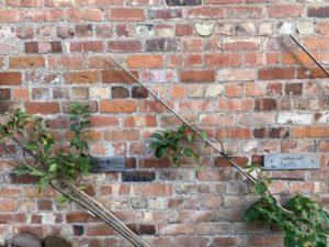 Two trees diagonally against a brick wall