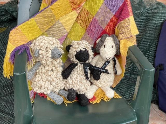 cuddly woolen sheep
